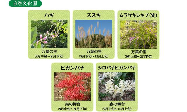 万博記念公園 自然文化園 9月の見ごろの花