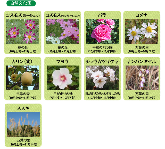 万博記念公園 自然文化園 10月の見ごろの花