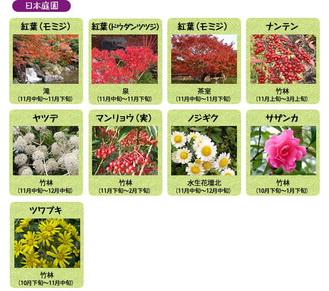 万博記念公園 日本庭園 11月の見ごろの花
