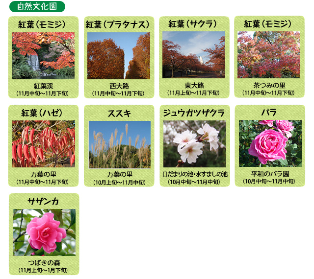 万博記念公園 自然文化園 11月の見ごろの花