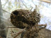エナガの巣