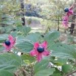 季節の植物観察ガイド