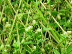 季節の植物観察ガイド②