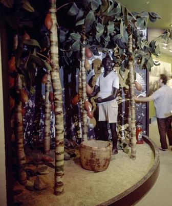 ココア栽培の模型展示