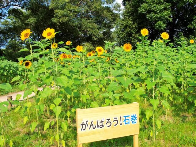 himawari_210727_02