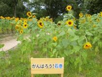 himawari_210806_04