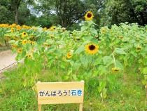 himawari_210811_03