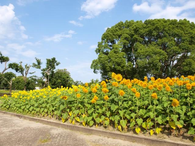 himawari_parkcafe_210727_01