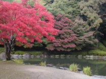 ひょうたん池紅葉2