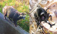 園内野生生物生息調査