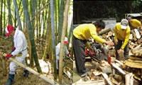 竹林での活動