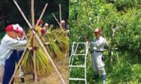 生産の森での活動