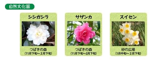 万博記念公園 自然文化園 1月の見ごろの花