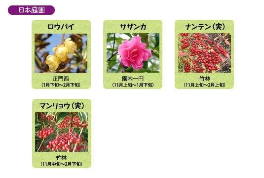 万博記念公園 日本庭園 1月の見ごろの花