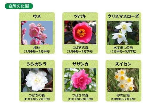 万博記念公園 自然文化園 2月の見ごろの花