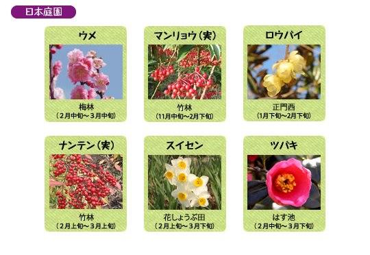 万博記念公園 日本庭園 2月の見ごろの花