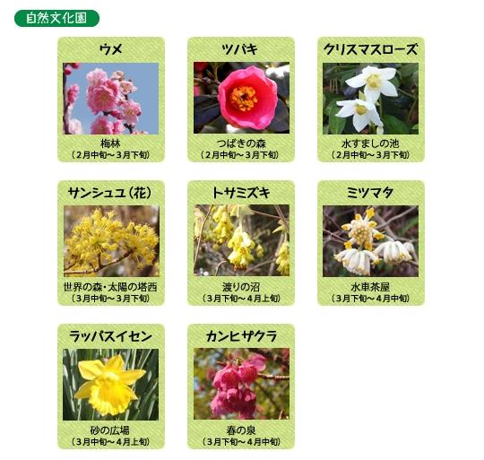 万博記念公園 自然文化園 3月の見ごろの花