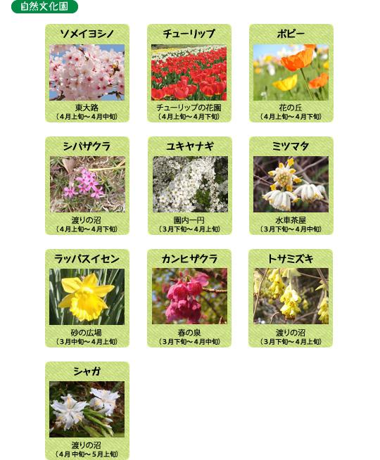 万博記念公園 自然文化園 4月の見ごろの花