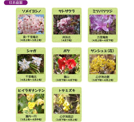 万博記念公園 日本庭園 4月の見ごろの花