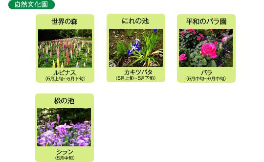 万博記念公園 日本庭園 5月の見ごろの花