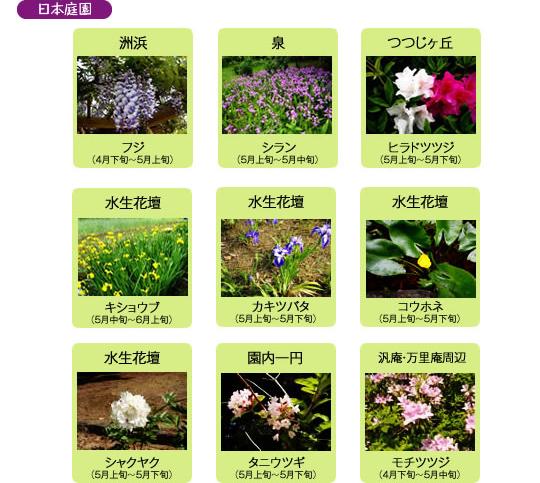 万博記念公園 自然文化園 5月の見ごろの花