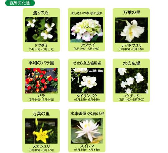 万博記念公園 自然文化園 6月の見ごろの花