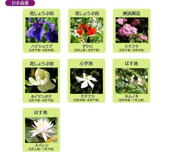 万博記念公園 日本庭園 6月の見ごろの花