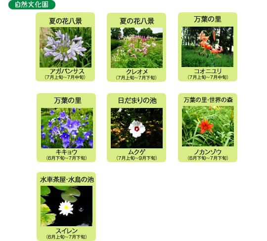 万博記念公園 自然文化園 7月の見ごろの花