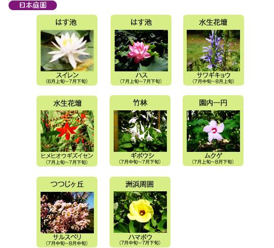 万博記念公園 日本庭園 7月の見ごろの花