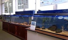 自然観察学習館 展示