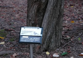 森の中の植物
