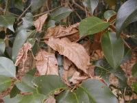 落ち葉がたまったところ