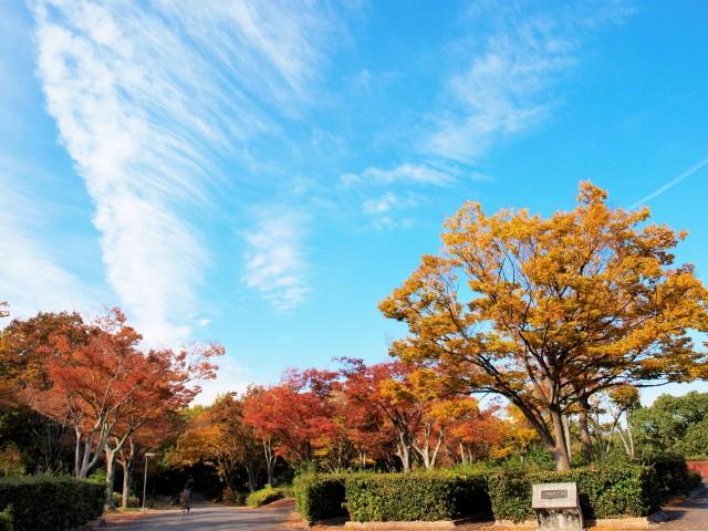 keyakinooka_201106_01