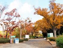 keyakinooka_201117_01