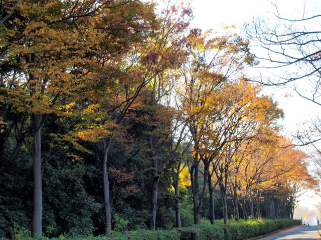 keyakinooka_201120_02