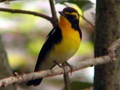 春の鳥を観察してみよう!
