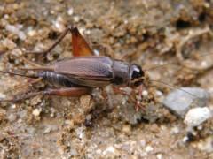 秋の昆虫観察会