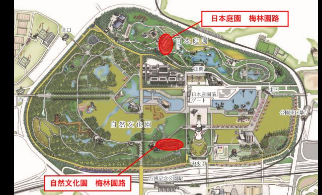 自然文化園・日本庭園の梅林園路の工事に伴う通行止めについて