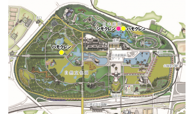 map_mokuren