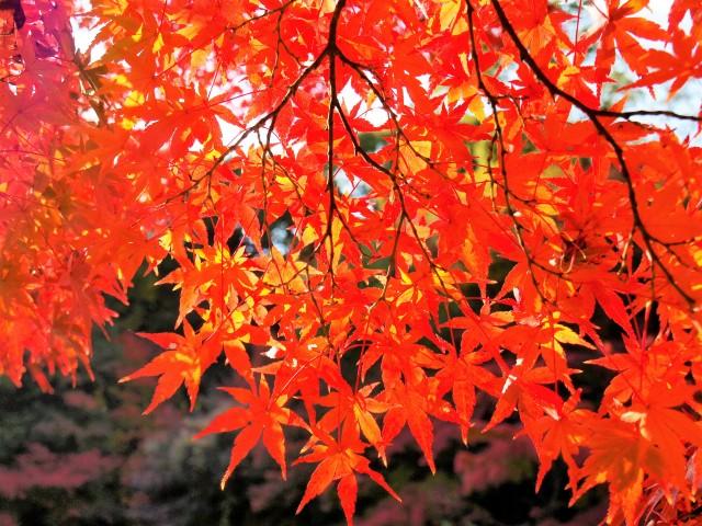 momijidani_201117_03