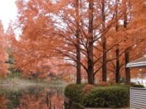 もみの池紅葉1