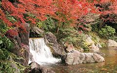 木漏れ日の滝(こもれびのたき)