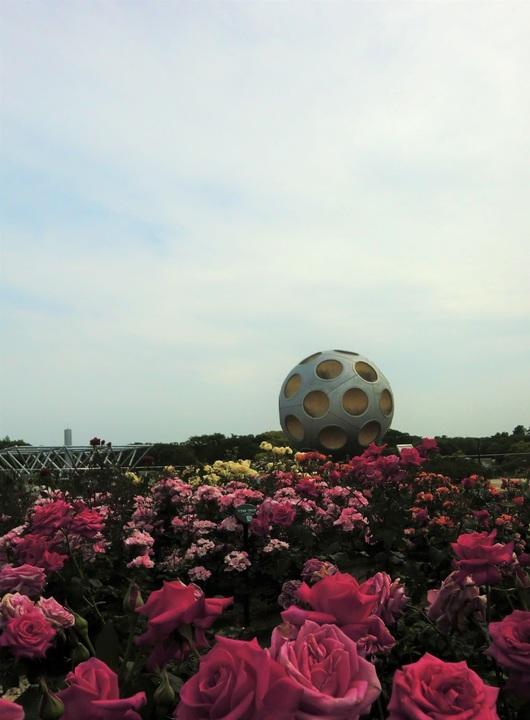 薔薇の世界の月の世界