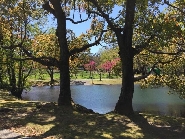 春の日だまりの池