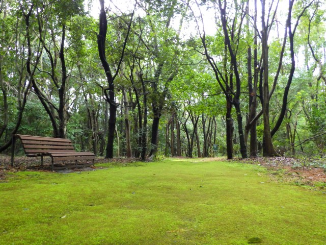 自然のグリーンカーペット