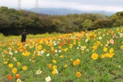花の丘の様子