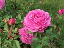 rose_201016_02