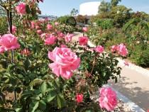 rose_201023_03