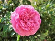 rose_201023_04