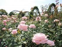 rose_201023_05